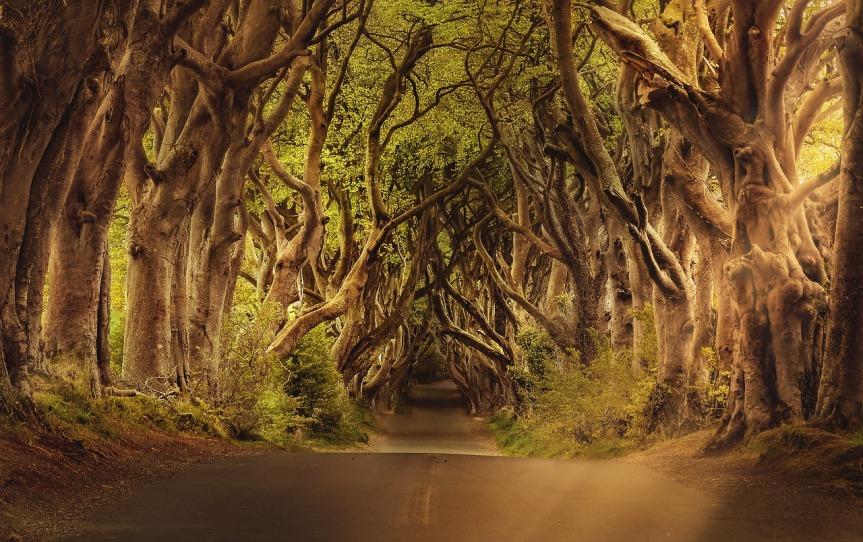 Die Kraft der Bäume|Wie Bäume unsere Gesundheit unterstützenkönnen.