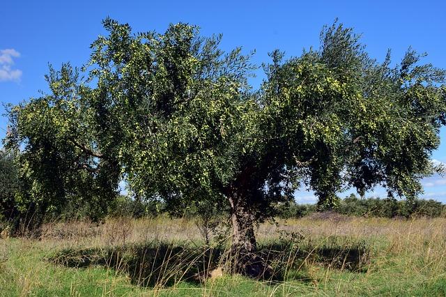 Tageskarte für den 22.07.2019 – Der Olivenbaum | Das Ungewollte lieben!